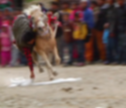 Horse Culture.png