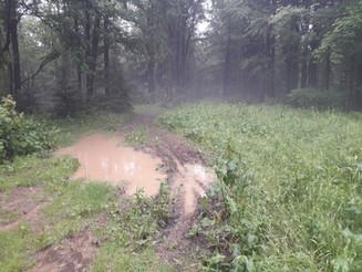 Relacja Główny Szlak Beskidzki: Iwonicz-Zdrój - Chata w Przybyszowie (Dzień 23)