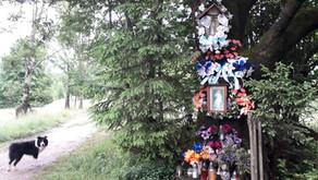 Relacja Główny Szlak Beskidzki: Węgierska Górka - Baza Namiotowa Głuchaczki (Dzień 15)