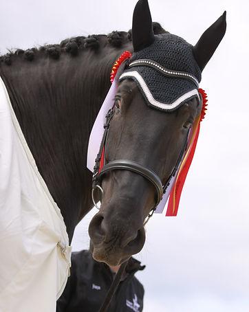 Charles Horse FACE.JPG