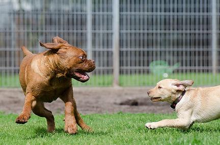 dog-pension-662808_1920.jpg
