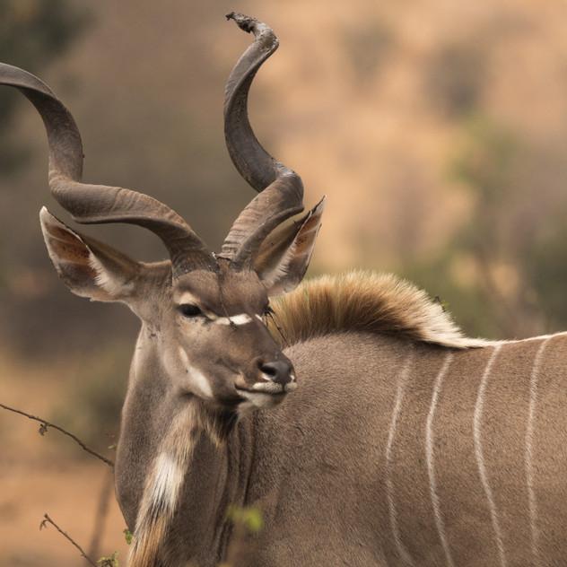 Safari Reinhardt Private Overnight Safar