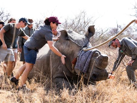 Life of a Wildlife Vet – Rita Piso