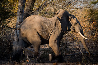 Central Kruger Safari Banner 2.jpg
