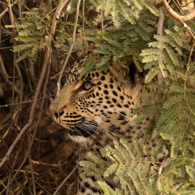 Safari Reinhardt Wildlife Photography (4