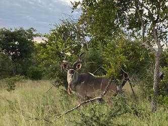 Bush-willow Creek Ranch Wildlife (7).JPG