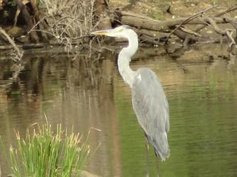 Bush-willow Creek Ranch Wildlife (2).JPG