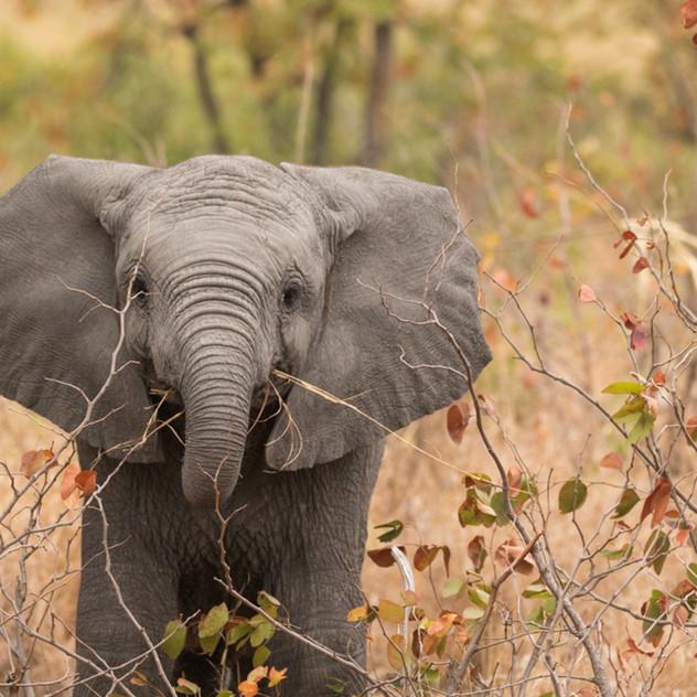 Safari Reinhardt Wildlife Photography (7