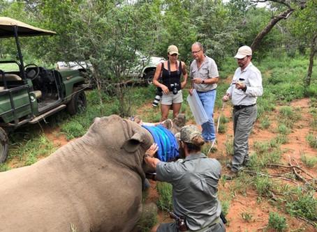 De-horning our rhino