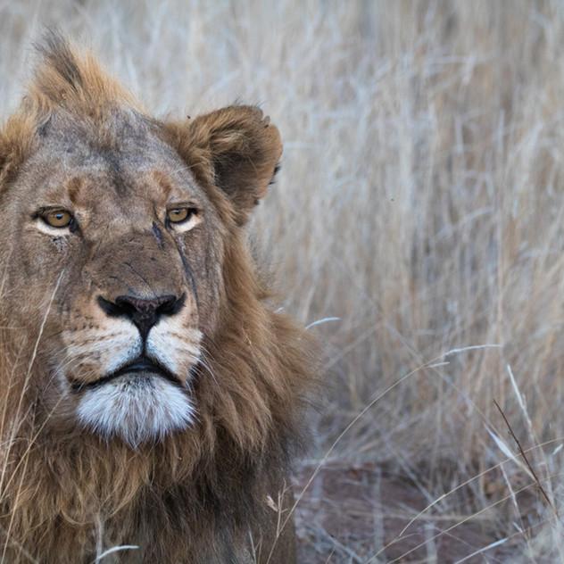 Safari Reinhardt Wildlife Photography (1
