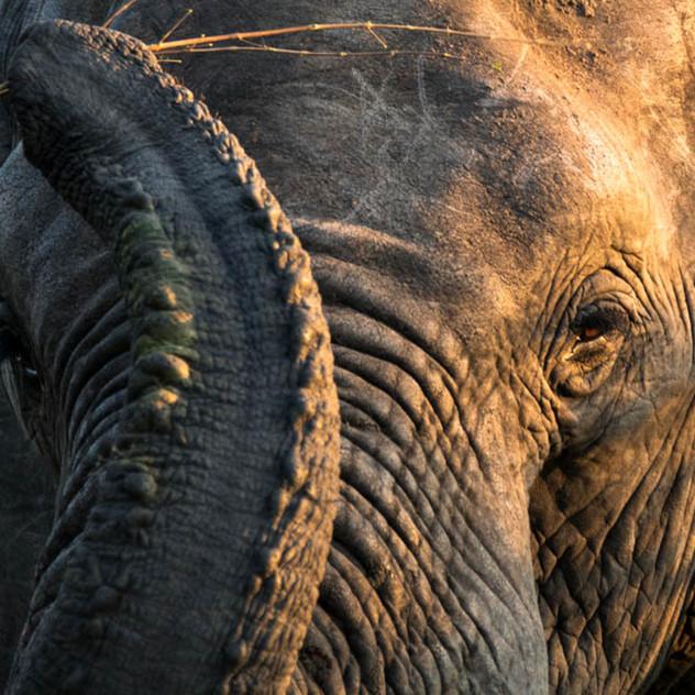 Safari Reinhardt Wildlife Photography (2