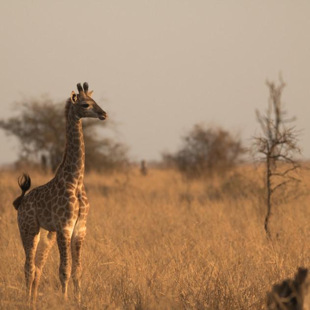 Safari Reinhardt Wildlife Photography (5