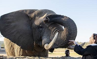 Sable Tours Elephant Interaction.jpg