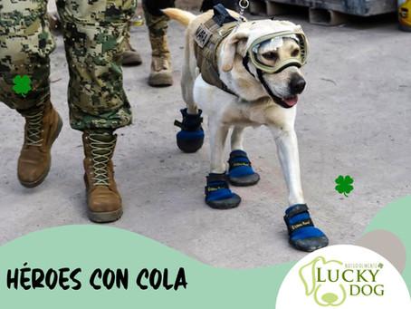 Perros de servicio: héroes con cola.