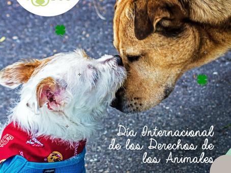 LuckyDog Conmemora el Día Internacional de los Derechos de los Animales.