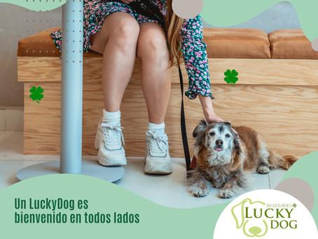 LuckyDog te recomienda: los mejores lugares para ir con tu perro.