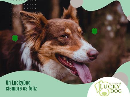 LuckyDog te aconseja: ¿Cómo preparar a tu mascota para el regreso a la normalidad?
