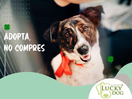 ¿Dónde adoptar perros en la Ciudad de México?