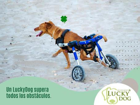Mielopatía Degenerativa Canina y Esclerosis Lateral Amiotrófica (ELA)en humanos. ¿Están relacionada