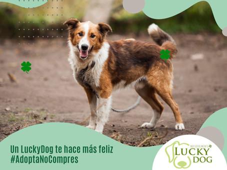 ¿Dog Parent primerizo? LuckyDog te da útiles consejos para cuando adoptas un perro por primera vez.