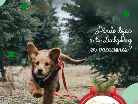 ¿Dónde dejar a tu perro si sales de vacaciones?LuckyDog te da algunas buenas recomendaciones.