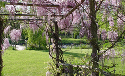 Lotus Village - Wellness Retreats