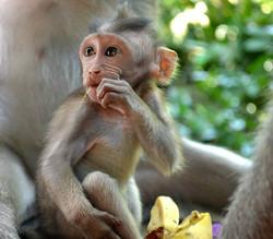 Lotus Village - Bali 2016 - Monkey Forest