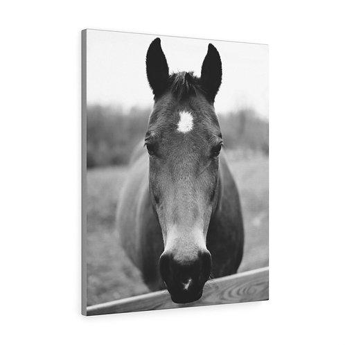 Horse in Monkton