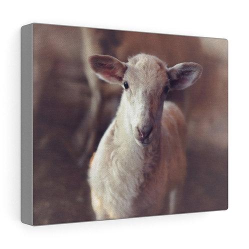 Little Lamb Portrait Canvas