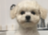 puppy2.png