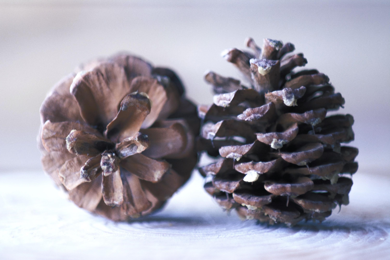 Pine Cones-4_edited