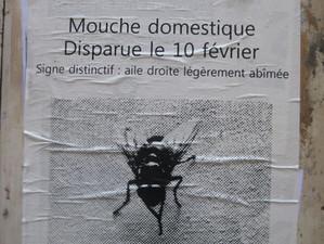 La mouche et le moustique, ceci n'est pas une fable…