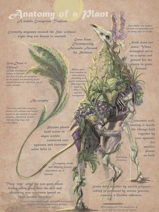 Anatomy of a Plant
