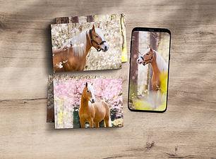 Printpakket bloesem paard.jpg