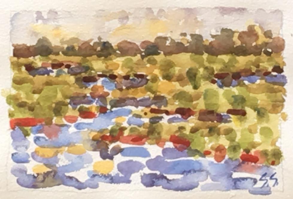 Nantucket Marsh