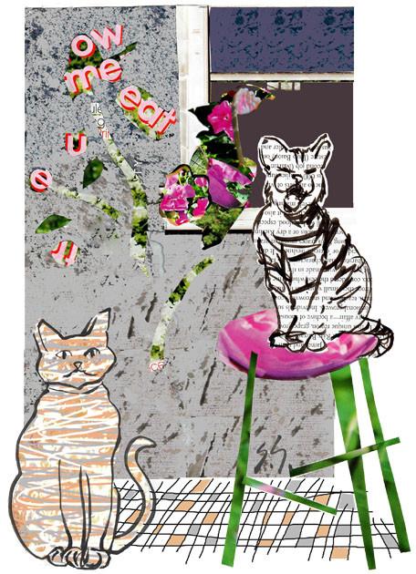 Cat's Song