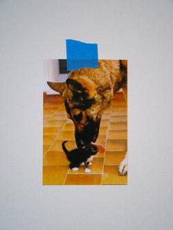 Cat + Dog, 2010