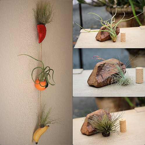 Fruity Airplant Hanger + 3 plants