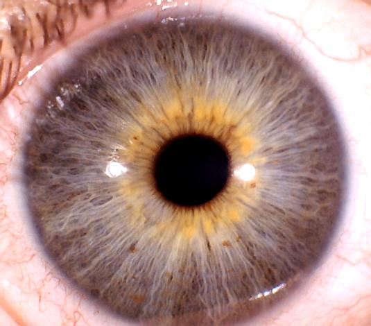 eye.BMP