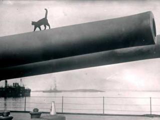 Animals Onboard