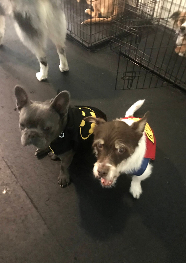 Our Heroes Paco and Otis!