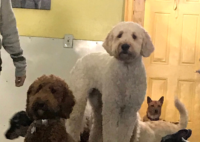 Maisy and Ella Rule as Doodle Queens