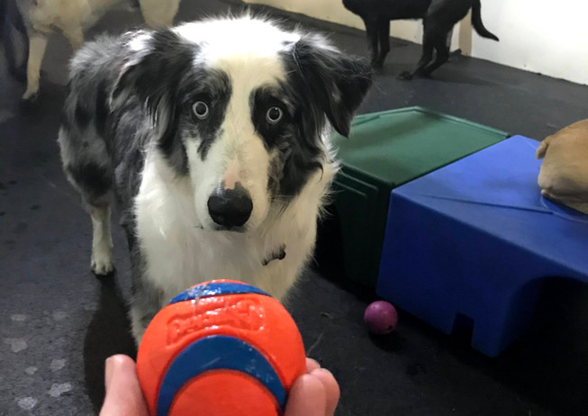 Von LOVES the Ball!