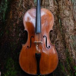 Sequoia & cello