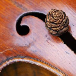 Sequoia cone & cello