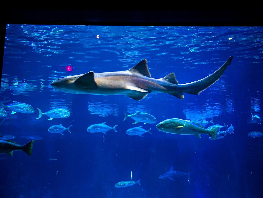 Orlando-Blogger-Katrina-Belle-Magical-Dining-Month-SeaWorld