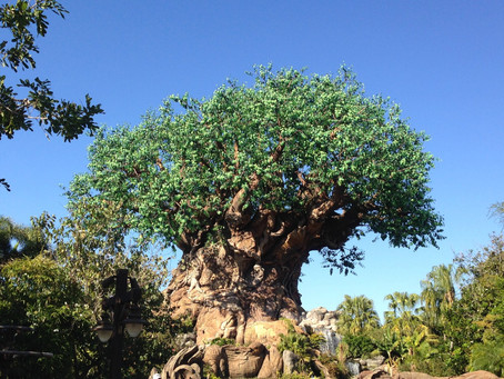 Disney's Animal Kingdom and the World of Pandora