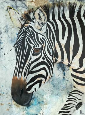 Zebra Acryl 60 x 80 cm.jpg