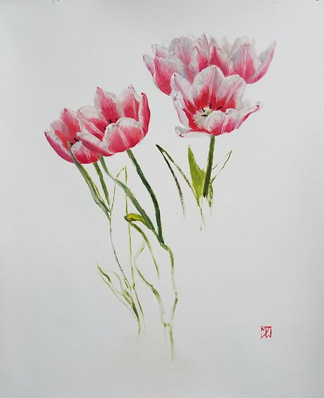 Bicolored Tulips