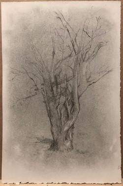 Tree Study